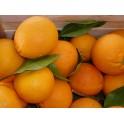 Oranges Kg
