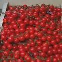 Tomate Cerise les 250 gr