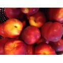 Nectarines  Jaune Kg